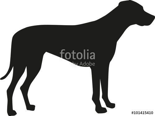 Laden Sie Den Lizenzfreien Vektor Rhodesian Ridgeback Silhouette Von Mickeing Zum Gunstigen Preis Auf Fot Hundezeichnung Rhodesian Ridgeback Hund Zeichnungen