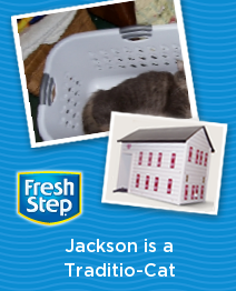 Jackson is a Traditio-Cat who has traditional taste and loves the classic comforts of home. How do I know this? Because I entered for a chance to win a custom litter box to match my cat's personality!