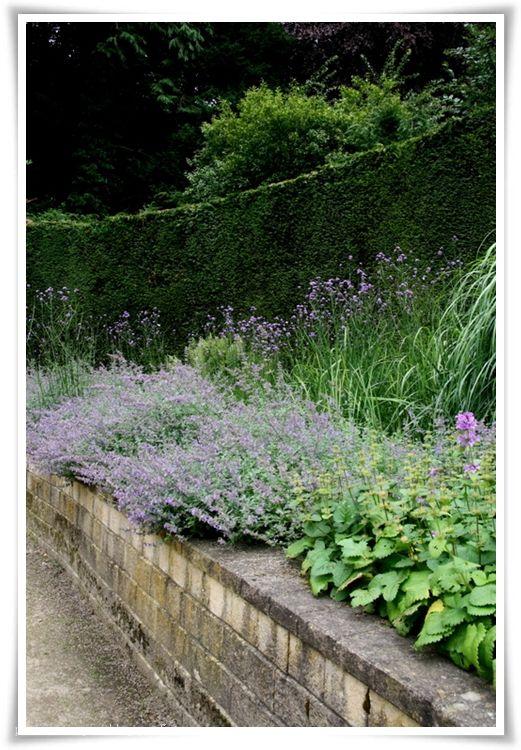 Thalictrum with irises?