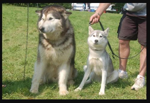 Die 5 Meistgesuchten Hunderassen Und Ihr Gleichwertiger Preis Im Shiro Ookami Kennel Die 5 Meistgesuchten Hunderassen Und Ihr In 2020 Shiba Inu Dog Shiba Inu Dogs