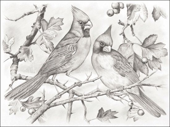 Cardinal Coloring Pages Pictures Imagixs By Cindie