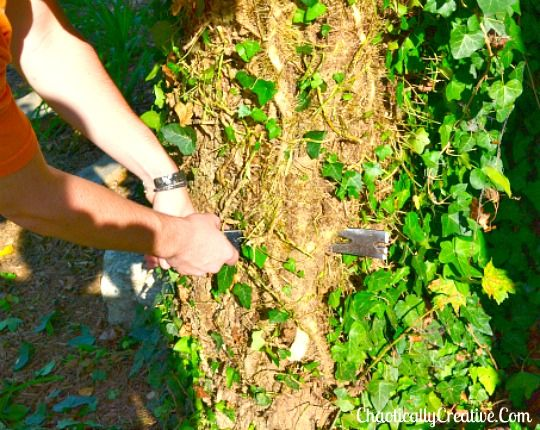 Gardening Tips Removing Ivy Trees Easy Landscape Outdoor Living Tools Http