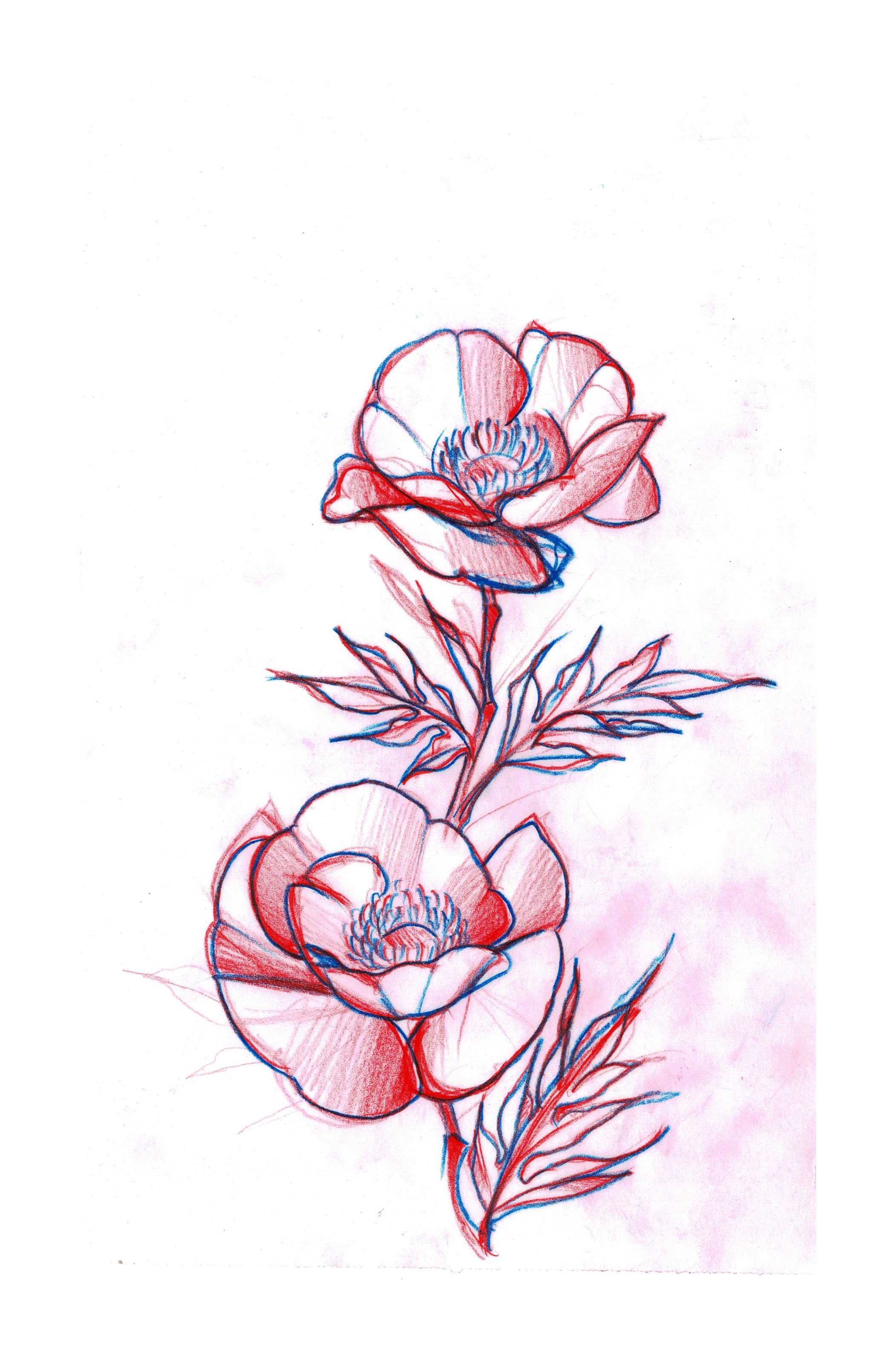 Poppy Flowers Tattoo Sketch Design Sketch Tattoo Design Poppy Flower Poppy Flower Tattoo