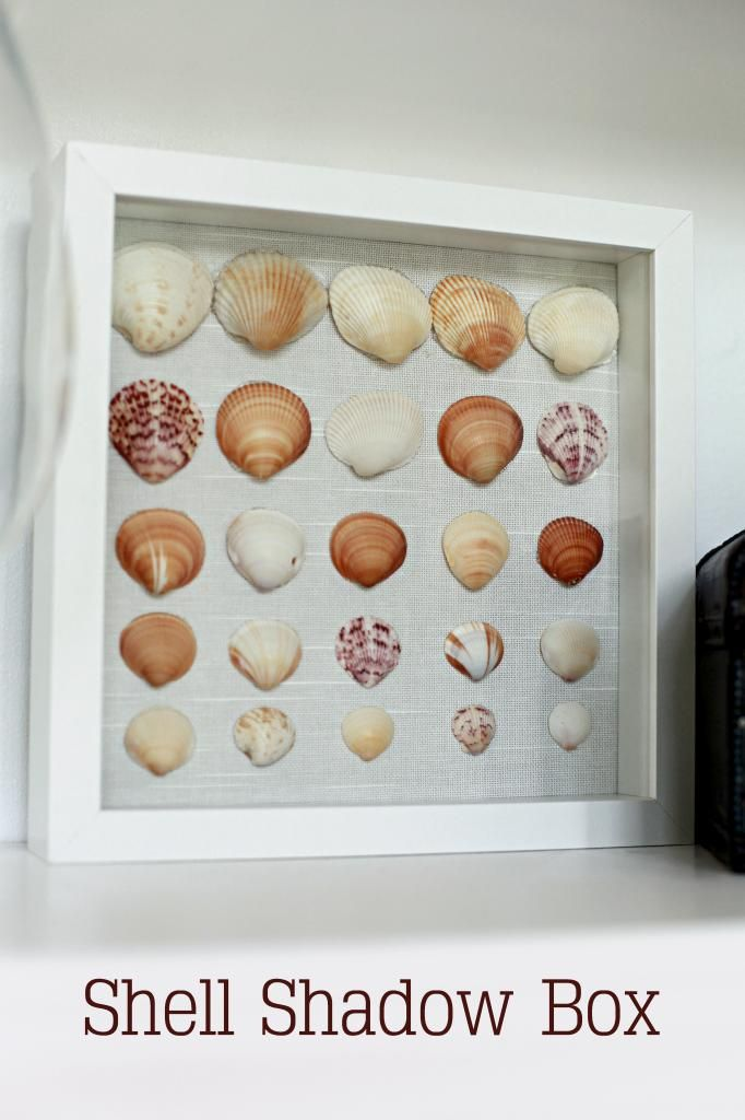 Shell out shadow box shell art and diy art for Diy shell crafts