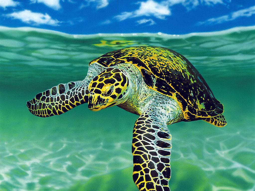 Sea Turtle Wallpaper High Quality Desktop, iphone and