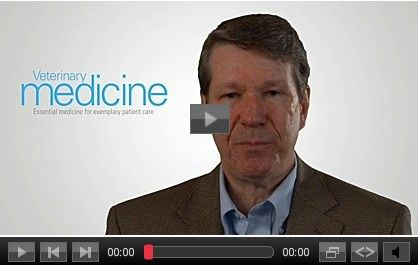 Video: Three compelling updates in veterinary endocrinology - David