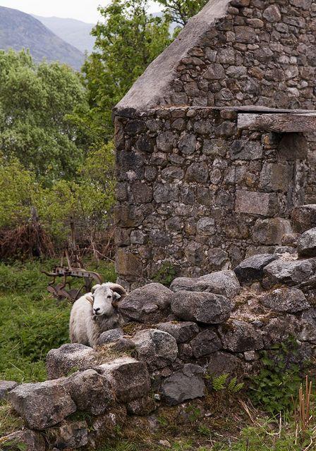 Scotland, sheep by Joe Dunckley, via Flickr