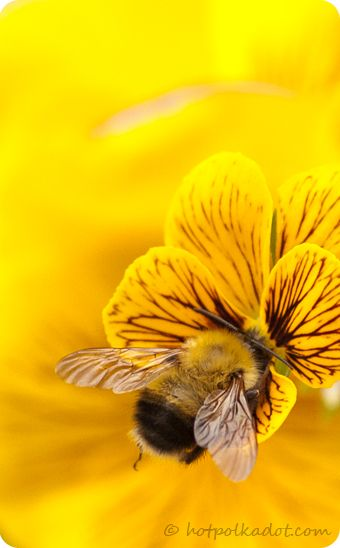 """#onewomancancanada """"bee""""lieve! """"Everything seems to tell the bumblebee, """"You'll never get off the ground."""" But I like to think that maybe - just maybe - our Divine Creator whispered, """"You can do it!"""" so it did!"""" - Mary Kay Ash, Miracles Happen @Mary Powers Powers Kay Canada"""