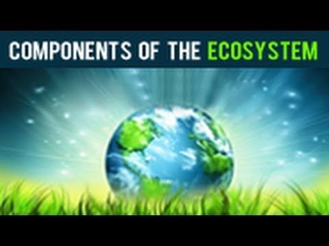 Components of the Ecosystem - YouTube