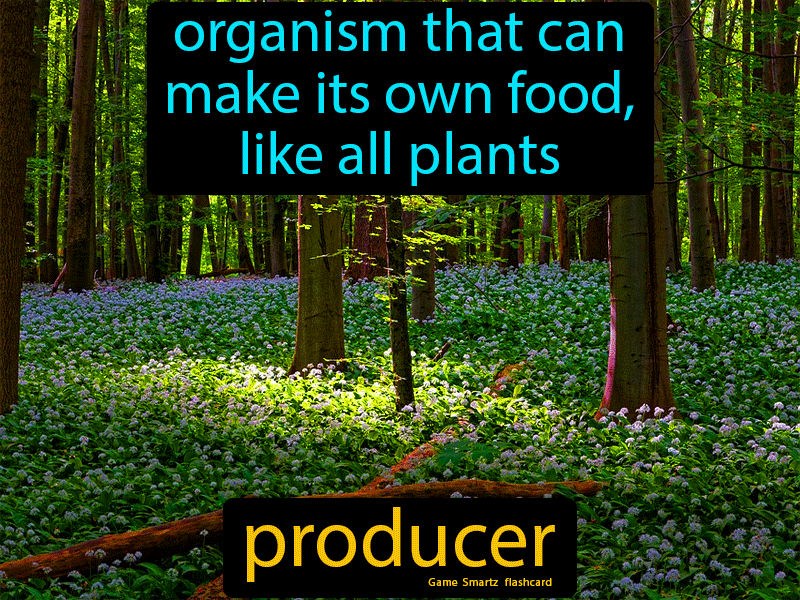 Producer: Organism that can make its own food, like all ...