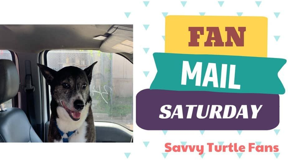 Savvy Turtle Fan Mail Saturday May 23 2020 Savvy Turtle Savvy Guys Be Like Saturday