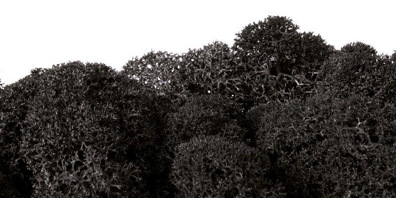 Carbon Black Moss #Mossmania #colors #carbonblack #moss #black #lichen