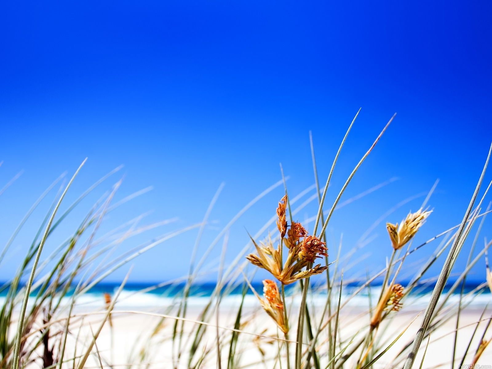 Summer wallpaper free page size 1600x1200 free desktop - Desktop wallpaper 1600x1200 ...
