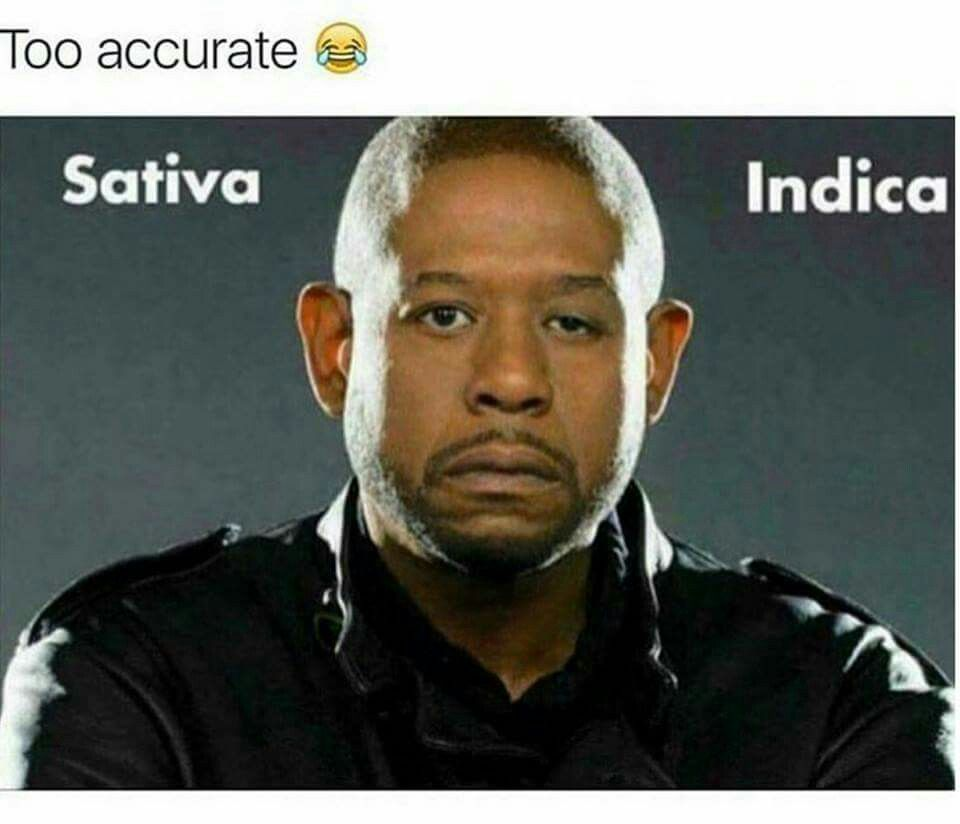 Sativa vs. Indica (With images) Memes, Funny pictures