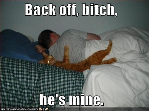 Untitled Funny Cat Memes Funny Text Memes Funny Cat Photos