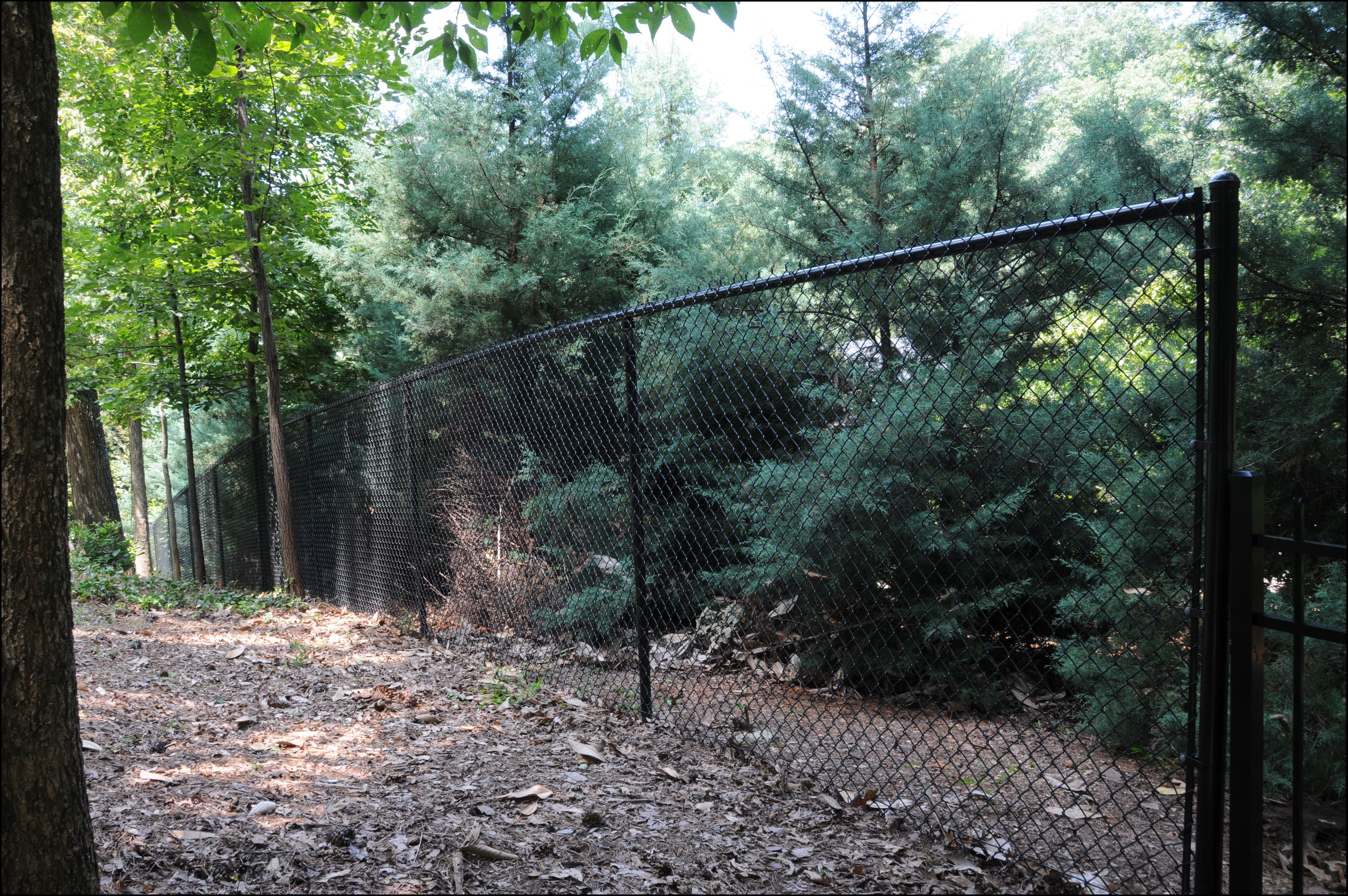 5 Foot Black Chain Link Fence Black Chain Link Fence Chain Link Fence Fence Design