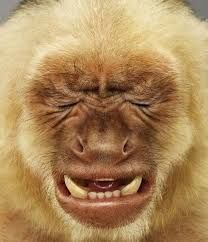Resultado de imagem para macaco boca aberta
