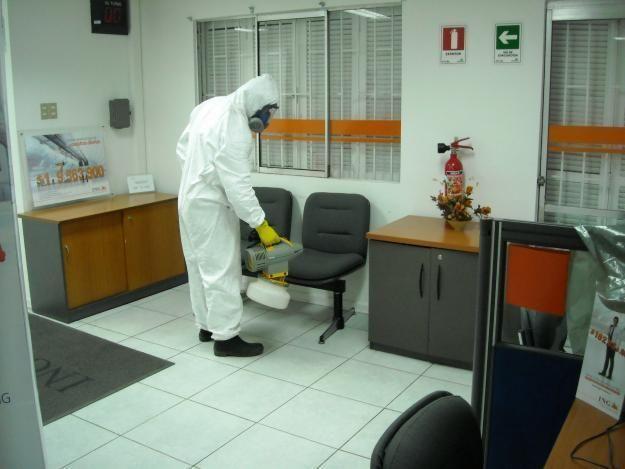 Como Acabar Con Las Termitas En La Pared Pasos Para Eliminar Las Termitas De Una Vez Por Todas Termitas