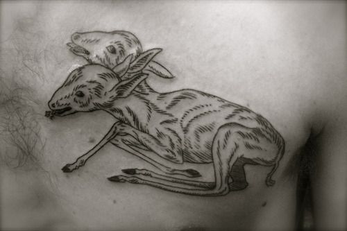 """""""Two-headed fawn from an 17th-century illustration by Albertus Seba. I colored it in, but that photo will be better when the tattoo has healed…  http://purplepanthertattoo.tumblr.com/  http://www.purplepanthertattoos.com/  http://en.wikipedia.org/wiki/Albertus_Seba"""""""