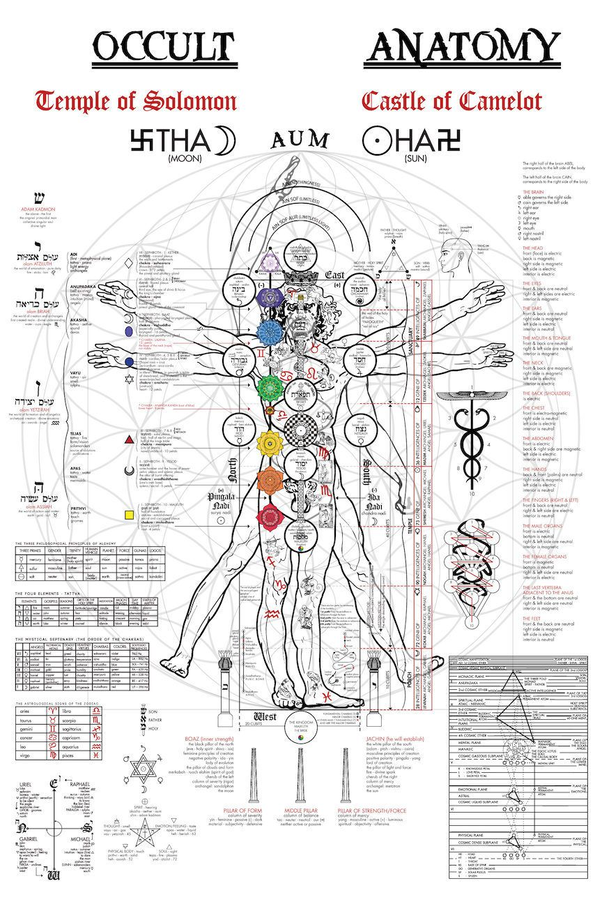Vinci Da Pictures Artwork Leonardo Anatomy
