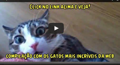 Acorde Sorrindo: Uma super compilação de vídeos com os gatinhos mai...