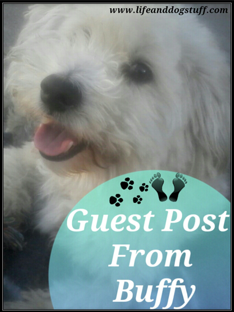 Guest post from Buffy #dogs #blog