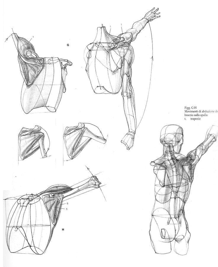 Pin by Fatmanur Keleş on anatomi | Pinterest | Anatomy, Draw and ...