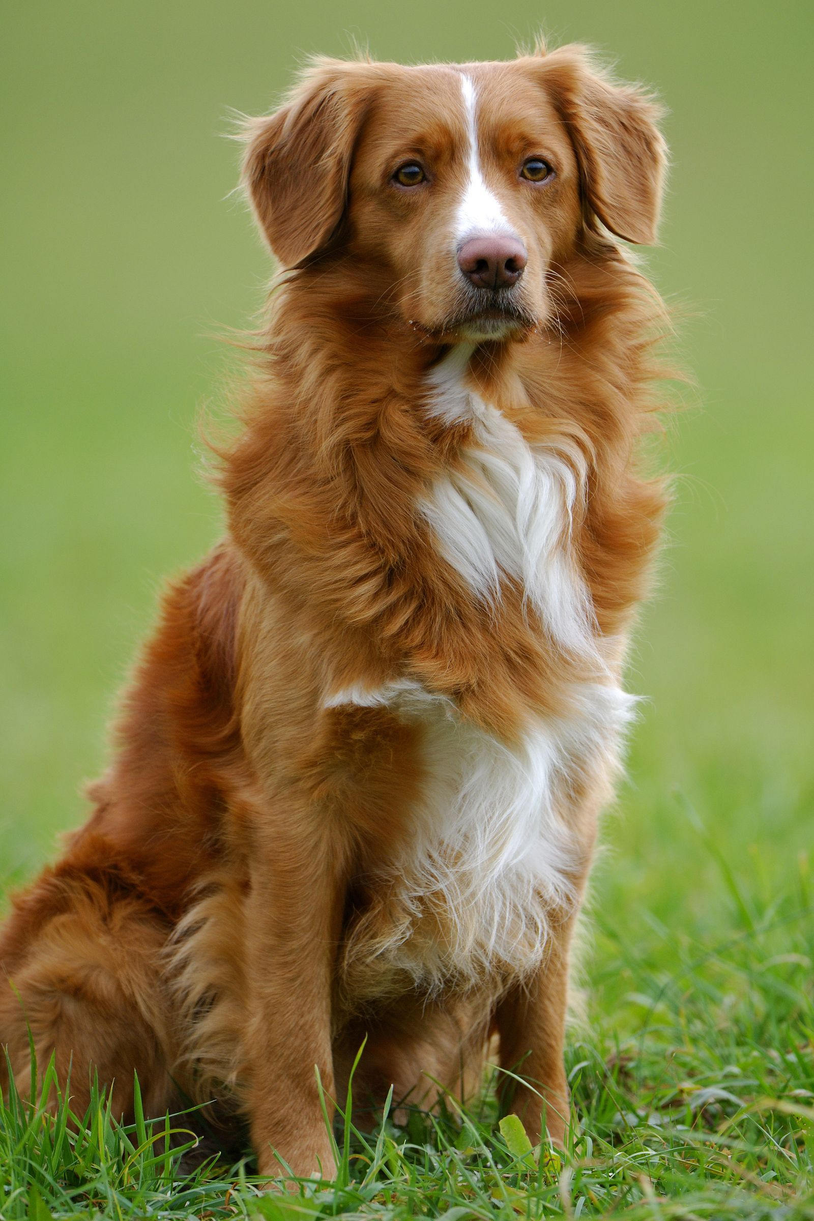 40 Best Medium Sized Dogs Dog Breeds List Best Dog Breeds Cute