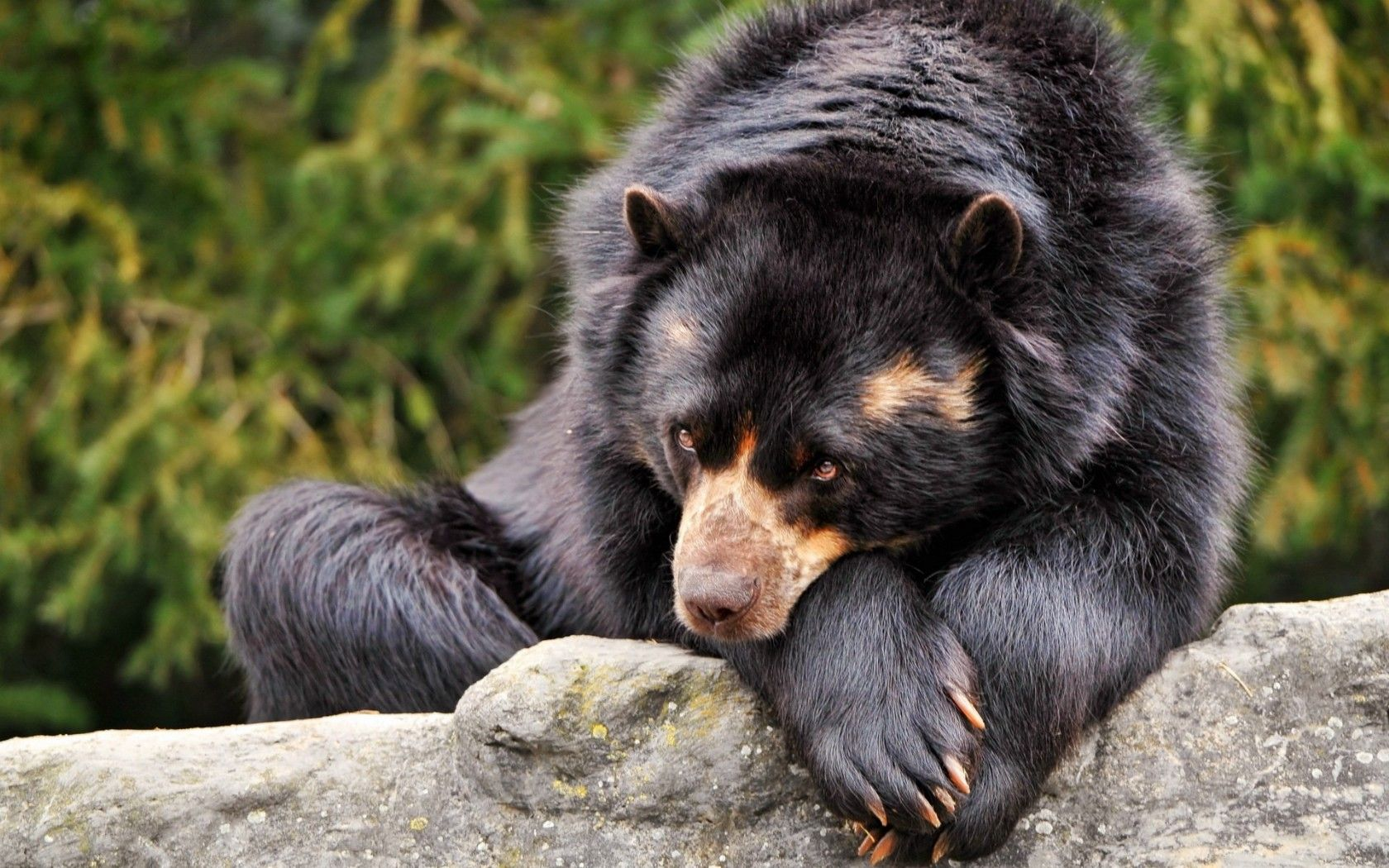 Pin by M. B. on Cuddly Creatures Black bear, Animals