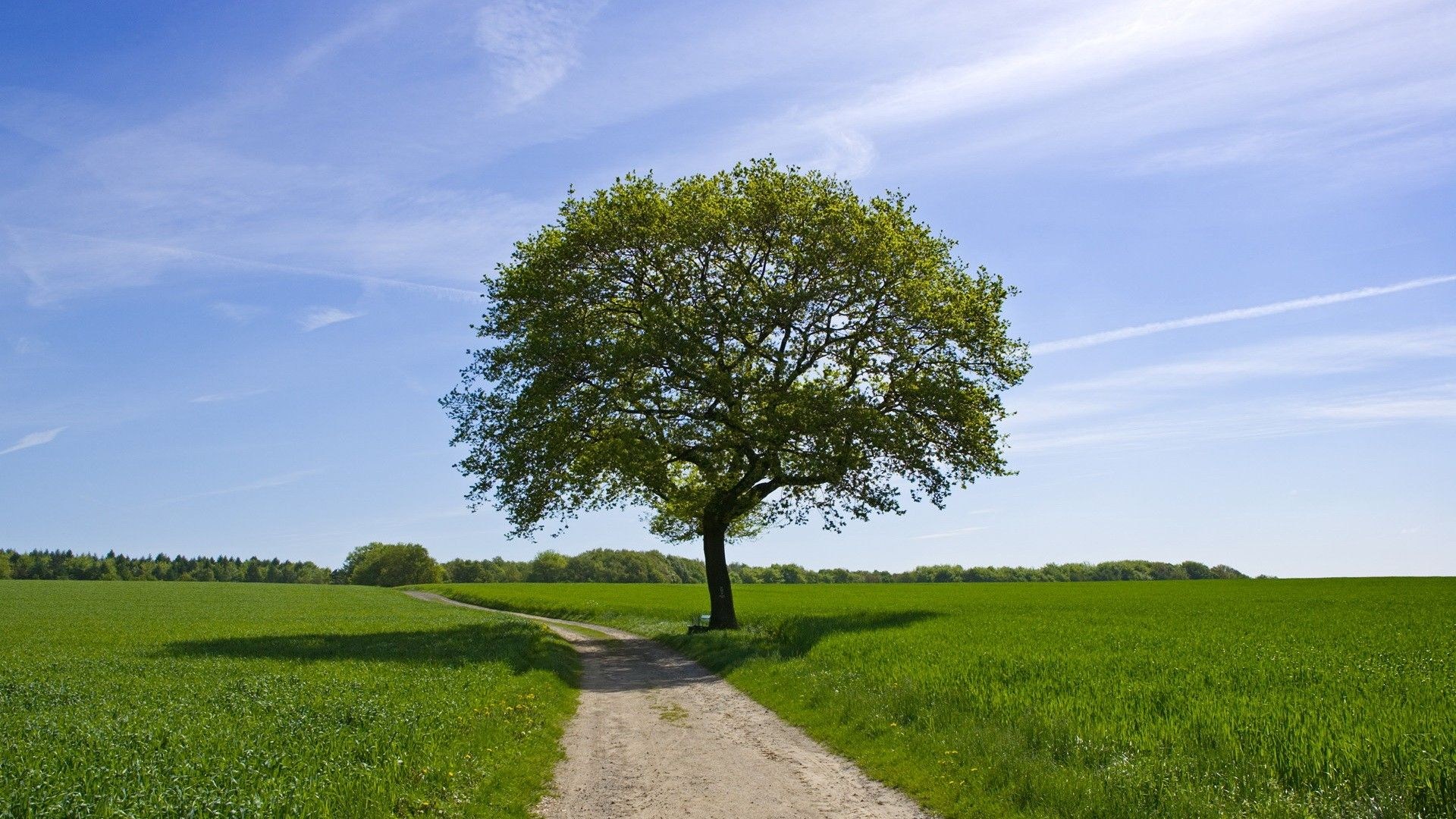 Standing Alone Tree Nature HD Wallpapers