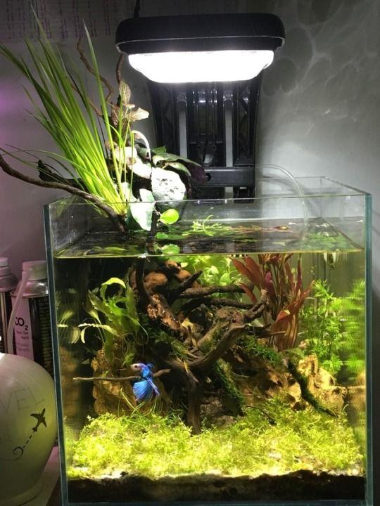 Betta Fish Tank Aquascape - Aquascape Ideas