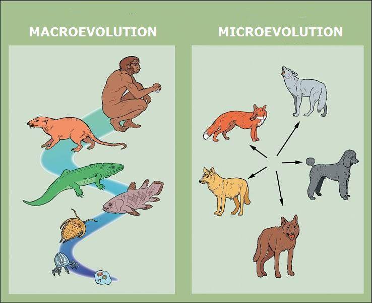 Evolution Microevolution Vs Macroevolution Teach Pinterest
