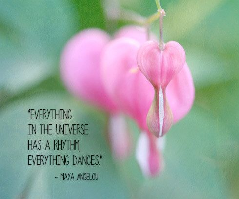 Typography Inspiration Photograph With Flower Pink Bleeding Hearts Green Modern Maya Angelou Quot Typography Inspiration Maya Angelou Quotes Pink Flower Photos