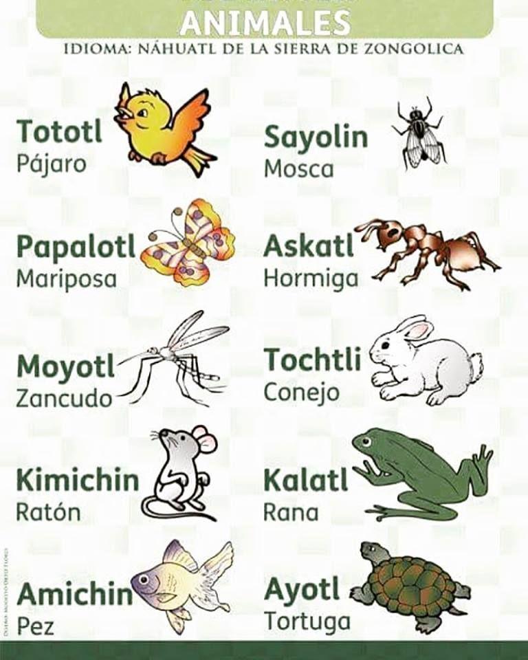 Conoces Los Nombres De Estos Animales En Lengua Nahuatl Aqui Te Enviamos Curiosidades De Palabras En Nahuatl Lenguas Indigenas De Mexico Nombres De Animales