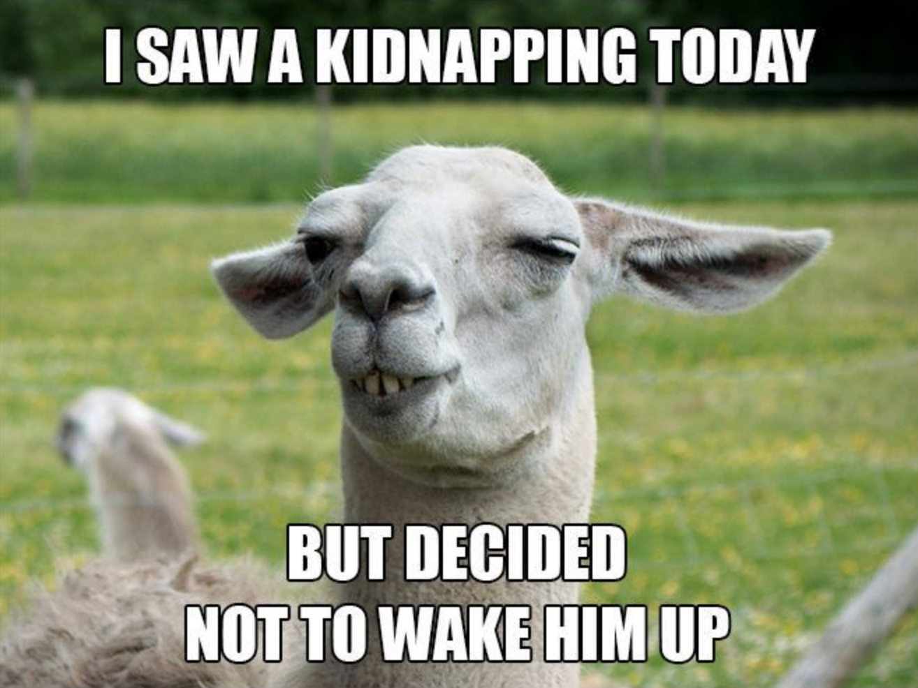 lama - clever - saw kidnapping - animal meme | Memes ...