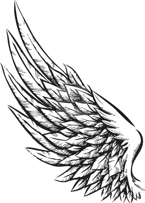 Line Art Wings : Wing Поиск в google tattoo pinterest tatoo
