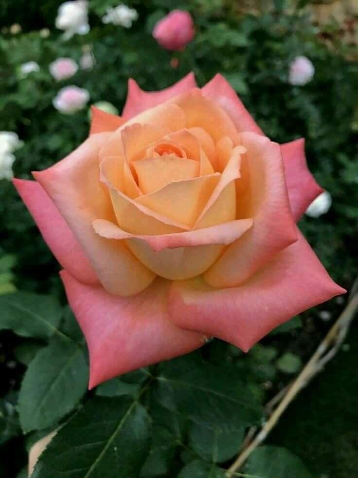 Pin de ni o calavera en flores idea tatuaje flores for Vivero plantas exoticas