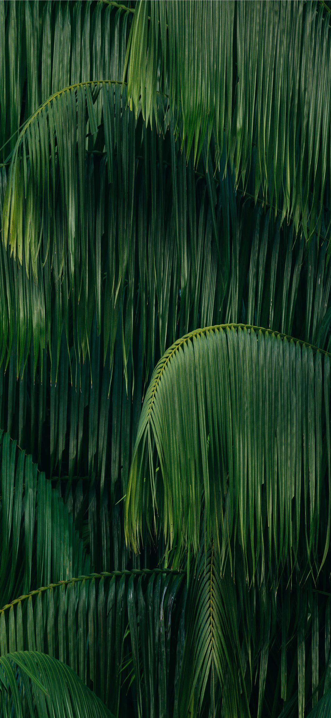 Green Coconut Trees Nature Tree Jungle Forest Iphone11wallpaper In 2020 Green Aesthetic Jungle Wallpaper Tree Iphone