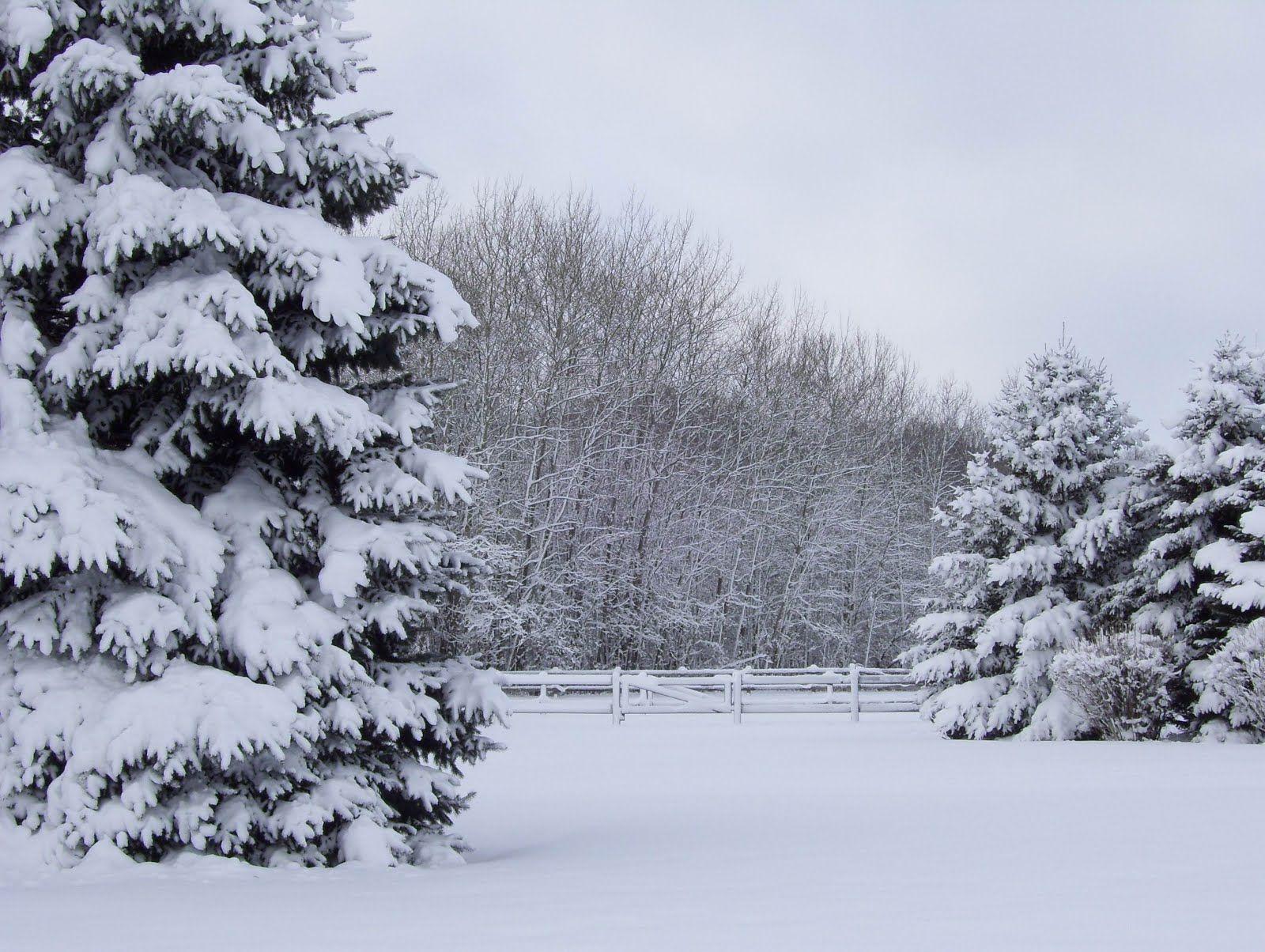 winter_wonderland_dec_29_2007-551.jpg (1600×1204)