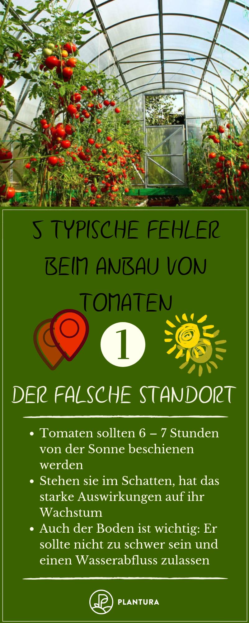 5 Typische Fehler Beim Anbau Von Tomaten Plantura Anbau Tomaten Garten Tomaten Zuchten