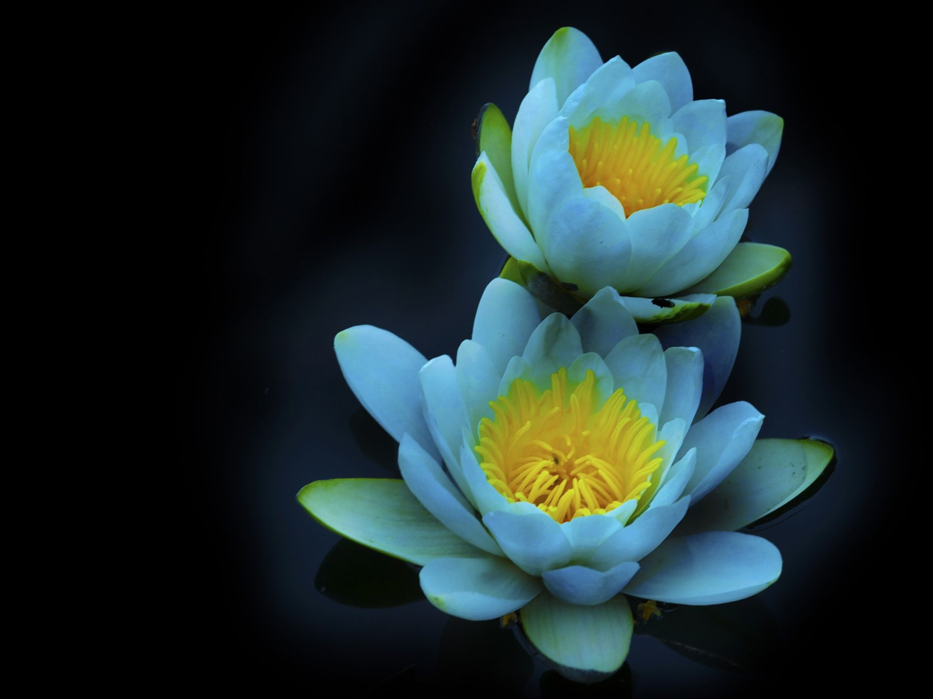 Water Lily 1920x1440 Wallpaper Water Lily Candle Water Lilies July Birth Flower