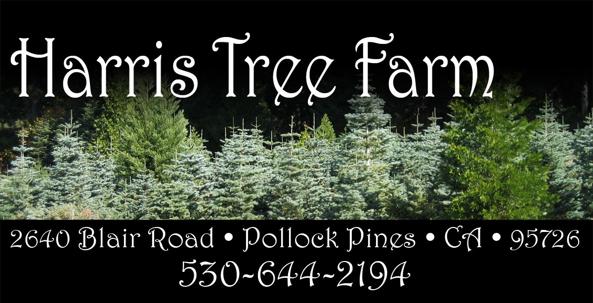Harris Tree Farm Christmas Trees Pie Apple Pie Blackberry Pie Turnovers Wreaths Blueberries Blackber Tree Farms Christmas Tree Farm Pine Christmas Tree