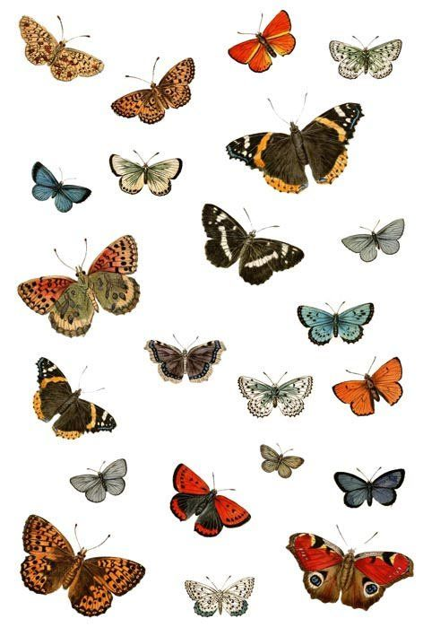 Pin By Mary Larson On Wallpaper Butterfly Wallpaper Vintage
