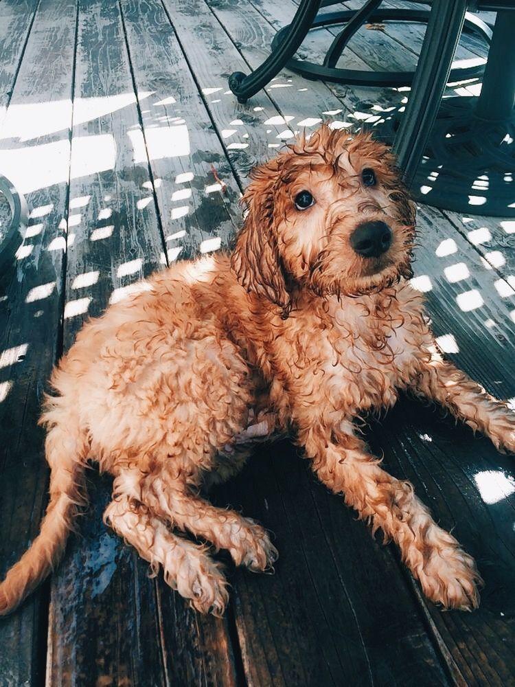 Pin By Schelaine Bennett On 3 S Cute Puppies Cute Animals Cute Dogs