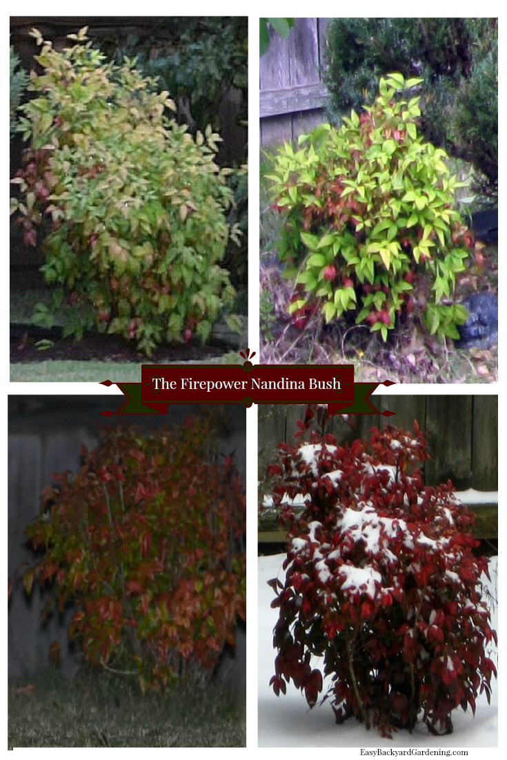 Year round plants for flower beds - Beautiful Firepower Nandina Bush Yard Designflower Bedslandscape