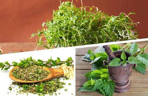 ¿Tienes muchas plantas en casa? ¿Cultivas verduras? Entonces no te pierdas cómo conseguir los mejores pesticidas, abonos e insecticidas ecológicos.
