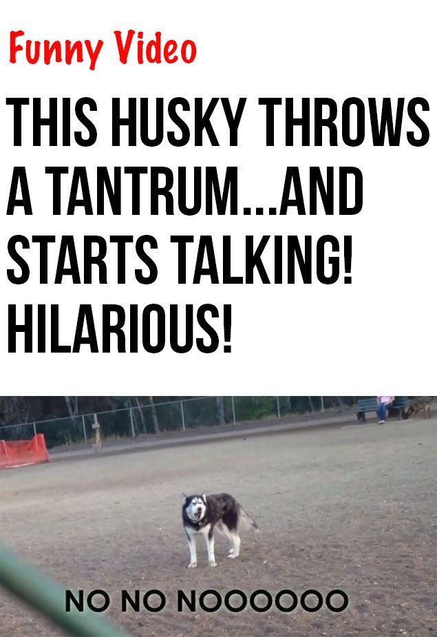 Best 25 Funny Talking Dog Videos Ideas On Pinterest Dog