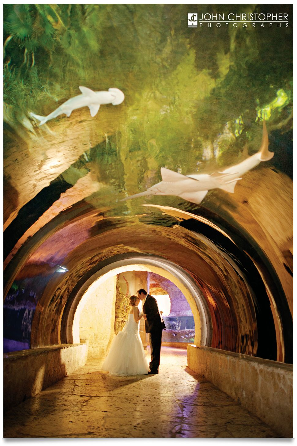 Dallas World Aquarium Wedding Tx Photos John Christopher Photographs Texas Photographer Dallasworldaquarium