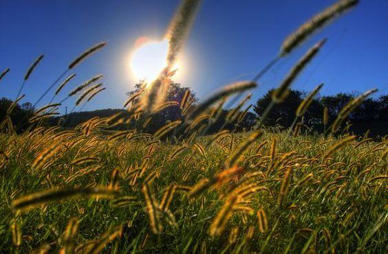 Beau soleil sur les champs de pollen