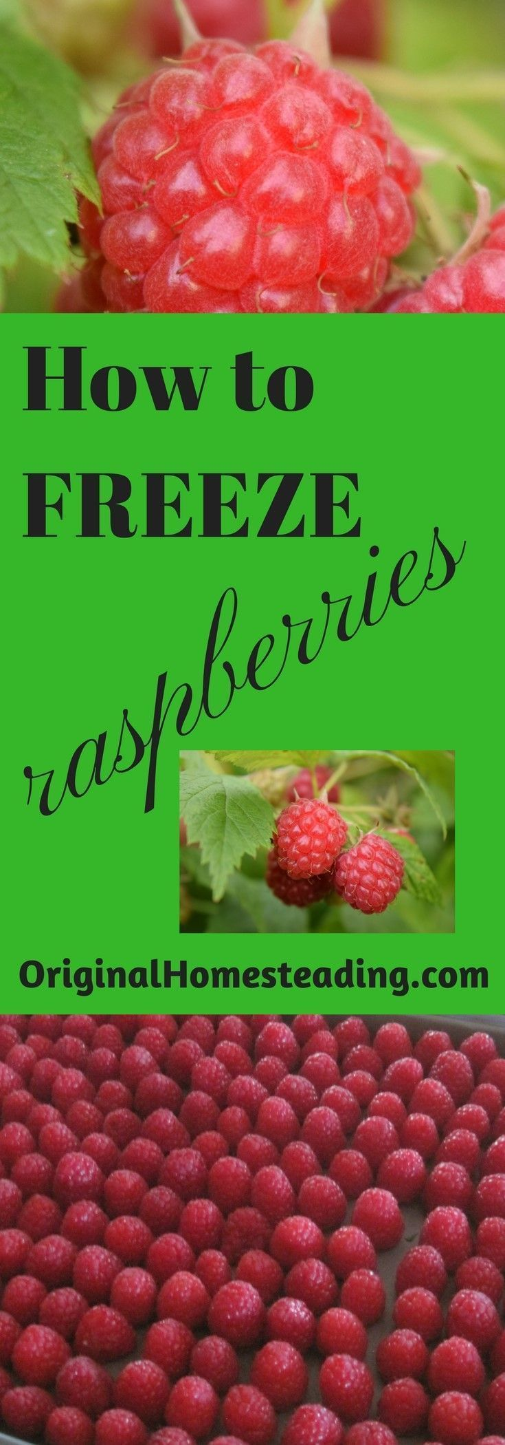 Freezing raspberries freezing fruit frozen frozen food